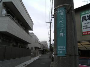 2008032829_sakura0029