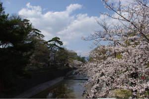 2010_0403sakurashukugawa0004