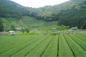 2011_0607080187